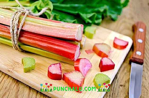 pierderea în greutate rhubarb dieta u dny