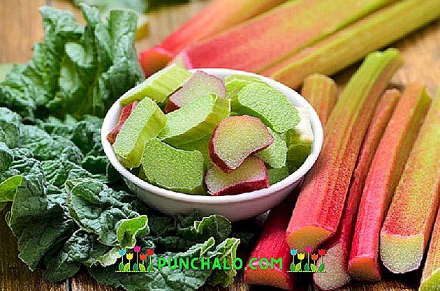 Este rubarb bun pentru pierderea în greutate Rhubarb: bun și rău