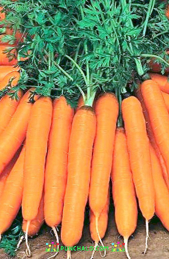 sárgarépa és uborka étrendon