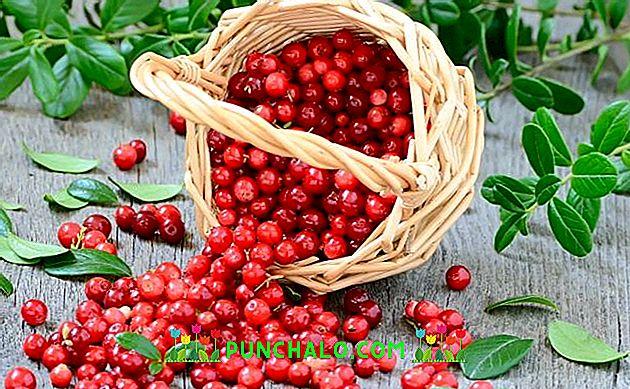 vörösáfonya gyógyászati tulajdonságai magas vérnyomás esetén)