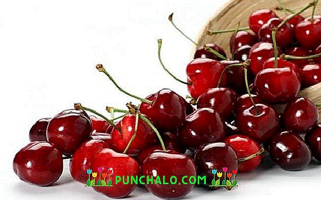 vyšnios ir širdies sveikata