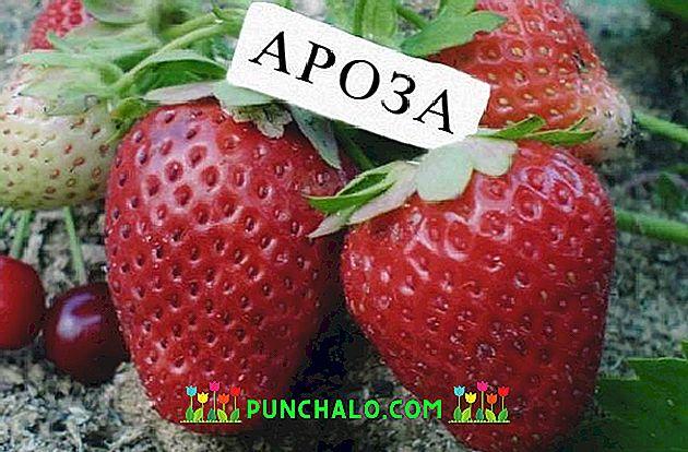hogyan kell kezelni az epret a vörös foltok miatt az arcán felbukkanó vörös folt hámlik
