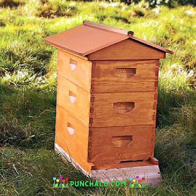 Hoeveel Honing Om De Bijen Te Verlaten Voor De Winter